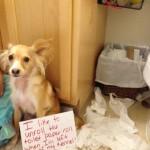 """""""Convertí el osito de mi mama en un juguete sexual…"""". 11 perros arrepentidos… y a la vez adorables!"""