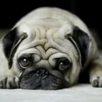 «Convertí el osito de mi mama en un juguete sexual…». 11 perros arrepentidos… y a la vez adorables!