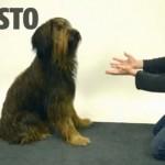 Imagen-tomada-video-Jose-Ahonen_MILIMA20140323_0404_30