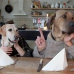 Two-Dogs-Eating-With-Their-Hands