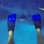 tiburon--644x362