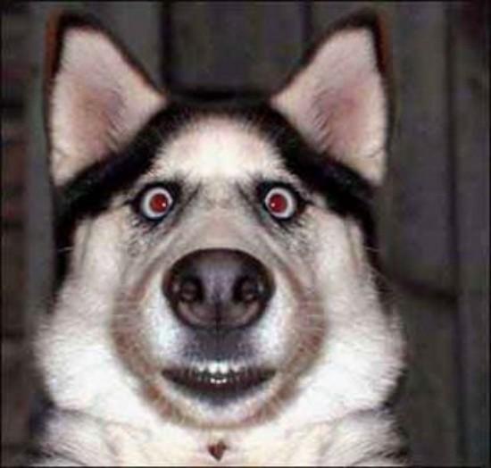 图片幽默的-DE-狗,对于Facebook的 - 最近-1