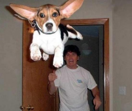 图片幽默的-DE-狗,对于Facebook的 - 最近-2 (1)