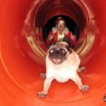 11 sehr erschrocken Hunde… und sehr lustig
