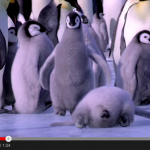 The best compilation of falling penguins… Spectacular!