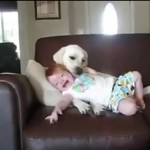 No deixis al teu gos cuidant teu nadó… Podria passar això… :-la