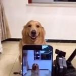 No te pierdas lo que hace este perro al ver una cámara